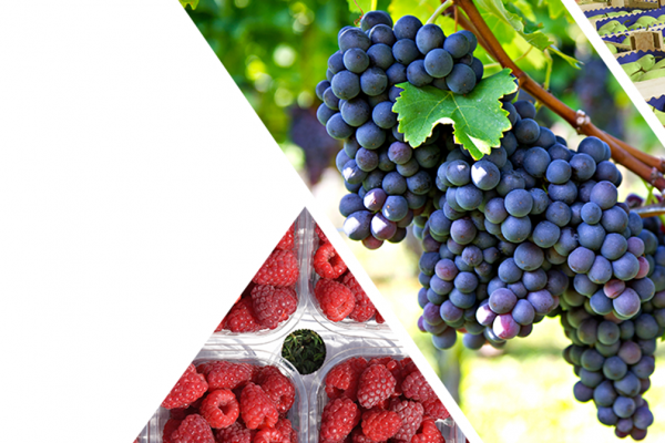 Fruit, Wine and Vegetable Trade Show this winter at Belgrade Fair! 3